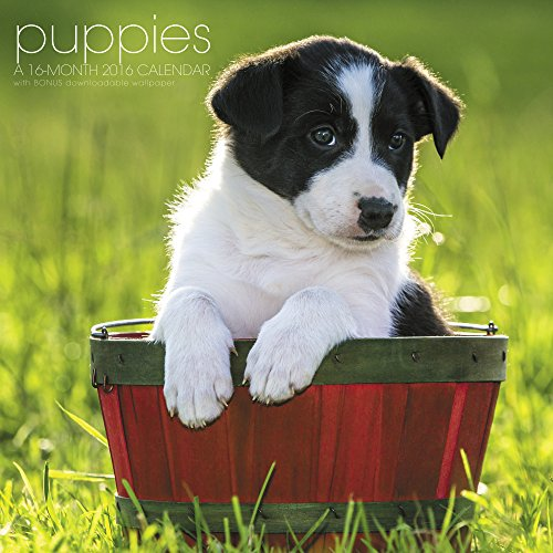Puppies Wall Calendar (2016)