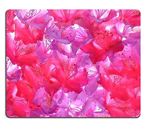 luxlady-gaming-mousepad-imagen-id-19978358-rododendros-petalos-fresh-natural-antecedentes