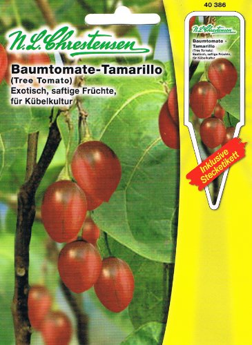 baumtomate tamarillo cyphomandra betacea tomate. Black Bedroom Furniture Sets. Home Design Ideas