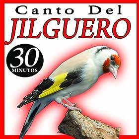 el canto del pajaro jilguero: