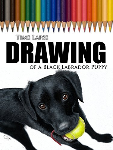 Time Lapse Drawing of a Black Labrador Puppy