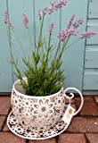 Shabby Vintage Chic Tea Cup Planter Plant Pot Holder