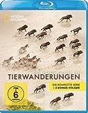 Das große Wunder der Tierwanderungen - National Geographic [Blu-ray]