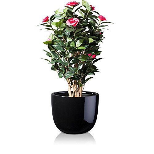 plant-pot-bottas-fibreglass-planter-flower-pot-colour-black-glossy-finish-weather-and-frost-proof-in
