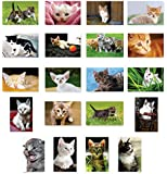 KITTENS postcard set of 20 postcards. Kitten post card variety pack. Made in USA.