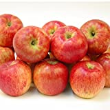 国華園 りんご 青森産 お楽しみ赤りんご 10kg1組