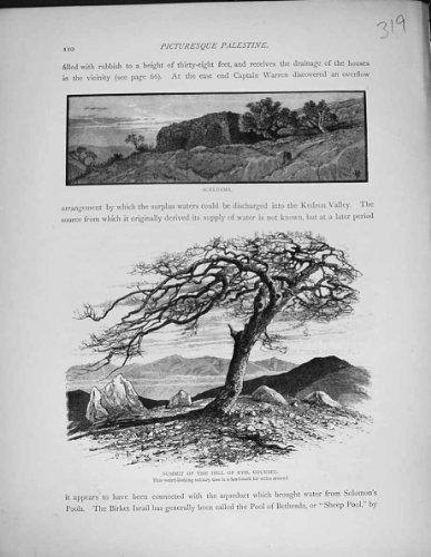 arbre-mauvais-davocat-conseil-de-colline-daceldama-de-vue-de-la-palestine-1881