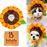 Bro'Bear Pet Funny Sunflower Hat with Glasses Design for Small Dogs & Cats Party Costume Headwear Orange (Small)