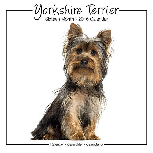 Yorkshire Terrier Studio Calendar 2016