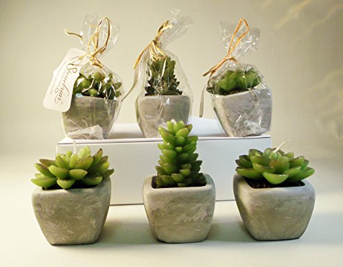 set-of-6-succulent-cactus-candles-by-stonebriar-collections