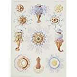 Porpema by Ernst Haeckel (Giclée print)||EVAEX