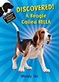 DISCOVERED! A Beagle Called Bella (Rainbow Street Shelter)