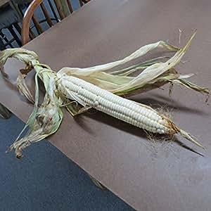 #1206 *NEW* GIANT GOLIATH SILO CORN*35 seeds*rare*WHITE*