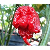 100 Seeds / Pack, Vegetable Pepper Seeds, Carolina Reaper Hot Red Pepper