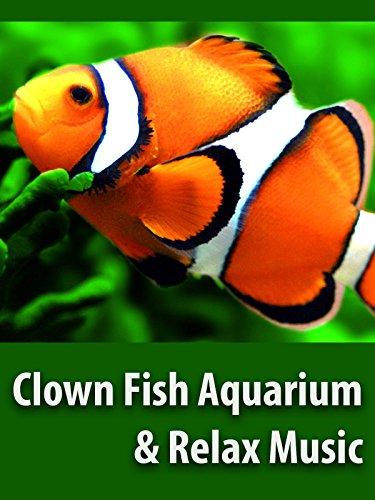 stunning-clown-fish-aquarium-the-best-relax-music-relaxing-screensaver-ov