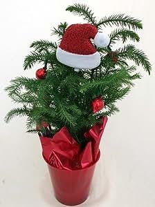"Amazon.com : Norfolk Island Pine Decorated - The Indoor Christmas Tree - 4"" Pot : Indoor House ..."