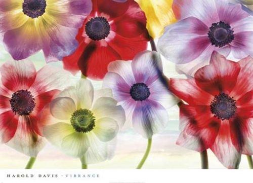 "Vibrance by Harold Davis 24""x36"" Art Print Poster"