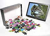 Photo Jigsaw Puzzle Of Jlmo-2660 Dragon ...