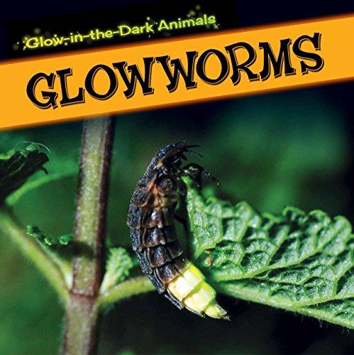 Glowworms (Glow-in-the-Dark Animals)