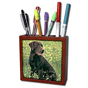 ph_806_1 Dogs Labrador Retriever - Chocolate Labrador Retriever - Tile Pen Holders-5 inch tile pen holder
