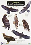 Guide to British Birds of Prey (Chart)