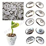 Magic Message Beans Seeds, Fun Novelty Gift, Grow Your Own Word Message