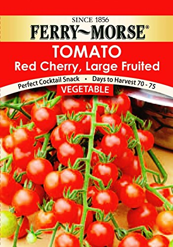 How to Grow Ferry-Morse Big Boy Hybrid Tomatoes | Home ...