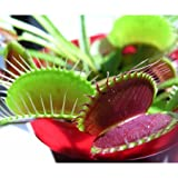 Grow your own venus fly trap kit.
