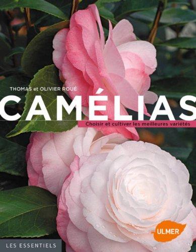 camelias-choisir-et-cultiver-les-meilleures-varietes-les-essentiels