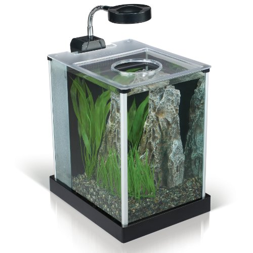 Desktop Glass Aquarium, 2-gallon