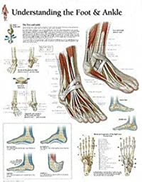 Understanding the Foot and Ankle Educational Chart Poster 22 x 28in