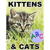 Kittens and Cats ABC Alphabet Book (An Easy Reader and Picture Book For Early Learning) ~ Elizabeth Small