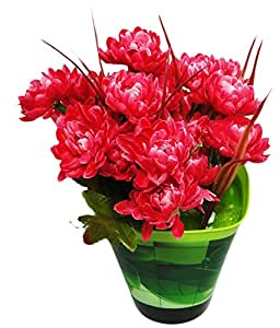 Go Hooked Go Hooked Admirable Red & Green Artificial Flowers with Pot