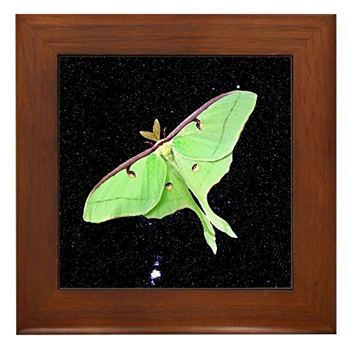 CafePress - Luna Moth - Framed Tile, Decorative Tile Wall Hanging (Luna Moth Framed compare prices)
