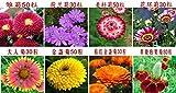 100粒/袋国立バルコニー鉢植えの菊の花の種の植物の種子出荷ヤグルマギクアスターデイジーコスモスの種