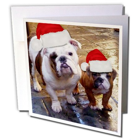 Edmond Hogge Jr Dogs - English Bulldog Christmas Wearing Santa Hats - 12 Greeting Cards with envelopes (gc_63087_2) (English Bulldog Birthday Card compare prices)