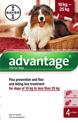 advantage-250-spot-on-solution-for-dogs-10-25-kg