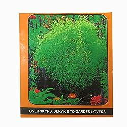 DCS Kochia Childsi Seeds (10Grm Per Pack)