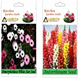 Alkarty Dimorphotheca White Star And Antirrhinum Snapdragons Seeds Pack Of 20 (Winter)