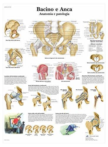3b-scientific-vr4172l-becken-und-hufte-anatomie-und-pathologie-1