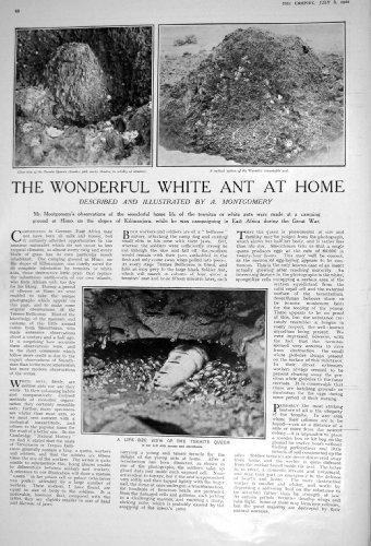 il-whiskey-scozzese-bianco-nero-1922-di-buchanan-della-formica-bianca-della-regina-della-termite
