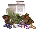 DuneCraft Dinosaur Plant Classroom Kit C