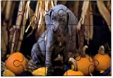 Weimaraner (Pup with Pumpkins)DOG 15 Pie...