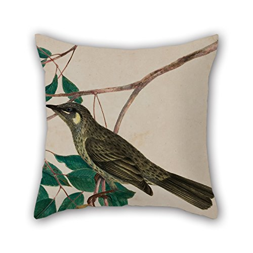 Bestdecorhouse Oil Painting John W. Lewin - Yellow-eared Honeysucker (Meliphaga Chrysotis) - Plate 5 From 'Birds Of New Holland, With Their Natu Pillow Cases 20 X 20 Inches / 50 By 50 Cm Best Choic bestdecorhouse