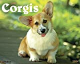 Just Corgis 2014 Wall Calendar
