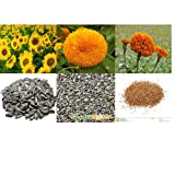 alkarty sunflower sungold and marigold seed