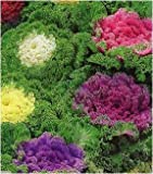 E-Gardening Kale - Pack of 50 Seeds