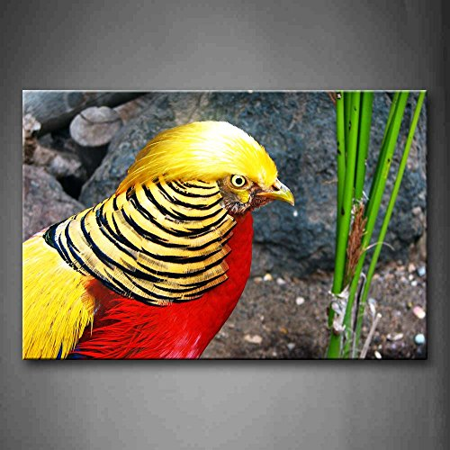 Golden Pheasant Near Green Plant Rock Wall Art Painting Pictures Print On Canvas Animal The Picture For Home Modern Decoration