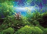 500ピース ネイチャーアクアリウム 水の景色 快晴の水景 500-91