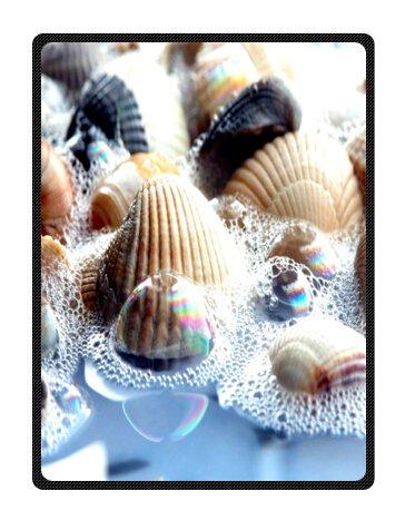 Seashell Throw Blanket front-1036233